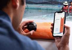 BioMar lanza tecnología para medición digital del color de los peces