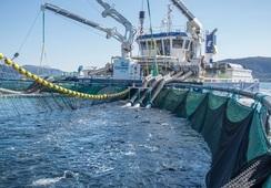 AKVA group og Flatsetsund Engineering inngår salgssamarbeid