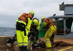 Ny studie: Lys fremtid for norske sjøfolk