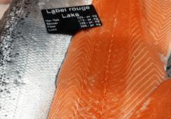 Tror lakseprisen blir påvirket av algeoppblomstringen