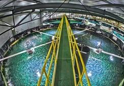 Billund Aquaculture alista su participación en RAStech Conference