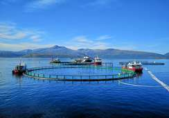 Fiskeridirektoratet: - Opplever algesituasjonen som under kontroll