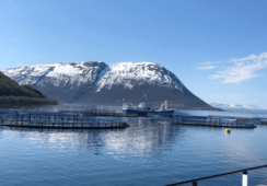 Algae kill 10,000 tonnes of fish worth £56m in Norway