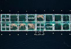 Hvor mye løste næringssalter fra oppdrett tåler kysten?