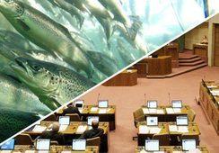 Abordan proyecto que permitiría disminuir uso de antibióticos en salmón