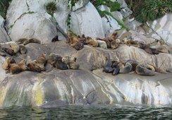 Realizan taller de buenas prácticas en la prevención de pérdidas por lobo marino