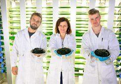 Produksjon av algefôr skaleres opp