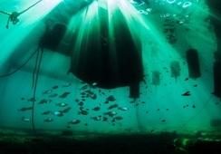 Incar anuncia ciclo de conversatorios  sobre acuicultura sustentable