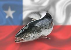 Chilean salmonid export earnings fall 11.5% in H1