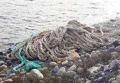 Autoridades llaman a que industria acuícola mantenga limpias las playas