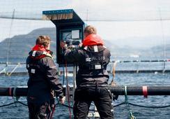 Chile: Scale AQ desarrolla tecnología para proyecto de acuicultura oceánica