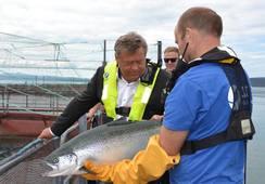 Fuerte aumento de envíos de salmón noruego por mayor acceso a China
