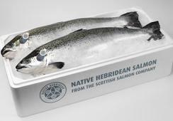 Exportaciones de salmón escocés aumentan 25% en primer semestre
