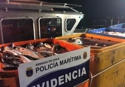 En libertad quedan 14 detenidos por robo de 25 toneladas de salmón