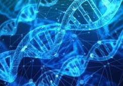 Identifican genes candidatos para la resistencia a SRS
