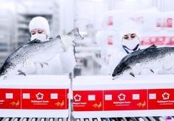 Oceana denuncia que recibió información incorrecta sobre uso de antibióticos de Multiexport