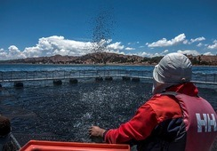 Revelan expositores de simposio sobre acuicultura en Perú