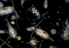 Early warning can help fish farming bloom