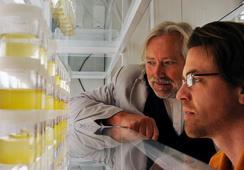 Los retos del estudio de floraciones algales ante el cambio climático