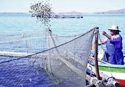 Perú: Simposio internacional abordará retos en innovación acuícola y pesquera