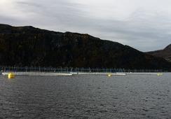 Har satt ut fisk på Husevågøy