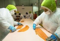 Los resguardos que tomaron las salmonicultoras frente al paro nacional