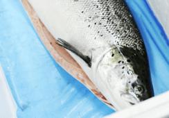 Noruega registra nuevo récord en valor de exportación de productos del mar