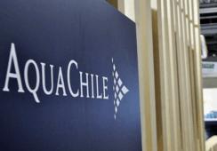 Estiman que Agrosuper normalizará su endeudamiento tras compra de AquaChile