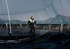 Grieg Seafood ønsker å stoppe avskogingen i Brasil