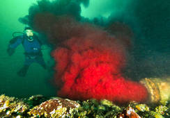 Red discharge pours into Canadian waters