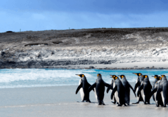 Falklands to study potential for aquaculture