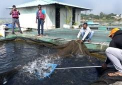 India: una potencial nación acuícola para el futuro