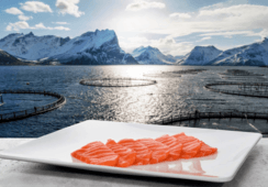 Salmon prices take a dip