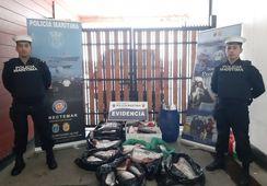 Autoridad Marítima de Chonchi incauta 358 kilos de salmón coho