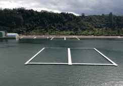 Chile's high-energy site cages ready for first fish