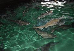 Nytt steg for Norcod og torskeproduksjon