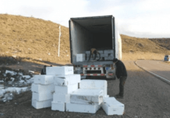Devuelven a Chile más de 17 mil kilos de salmón tras choque en Argentina