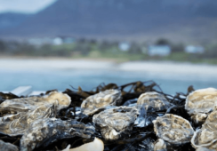Ireland shells out for mussel and oyster farmers