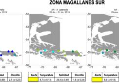 Abundancia relativa de Alexandrium catenella se mantiene normal