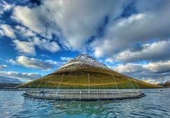 Bakkafrost gjør det bra på Færøyene