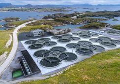 Bulandet Miljøfisk starter nå byggingen av sitt landbaserte pilotanlegg