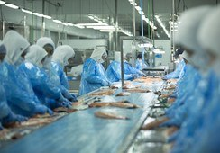 Salmones Austral pasa de ganancias a pérdidas pero mantiene EBITDA positivo