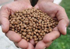 Lanzan estándar de sustentabilidad enfocado a productores de alimento para peces