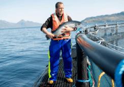 Escocia: Industria del salmón se adapta para seguir trabajando en crisis