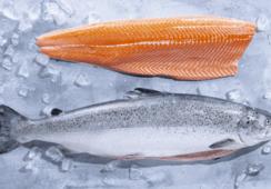 AlgaPrime es reconocida por impulsar sostenibilidad de productos del mar