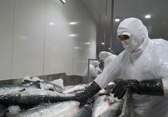 Aumentan las zonas de actividad salmonicultora con cuarentena total