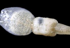 Aqua Pharma kjøper 50 % eierandel i luseselskap