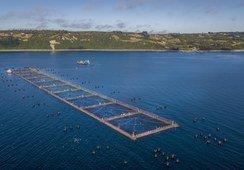 Hendrix Genetics presenta concepto G+ que potencia crecimiento de los peces