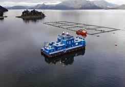 Blumar pone en funcionamiento innovador pontón alimentador en Aysén
