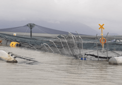 85,000 fish killed at wrecked Chilean salmon farm